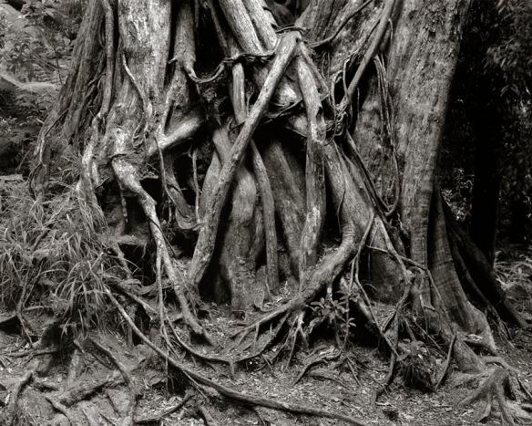 Ancient Rata.jpg