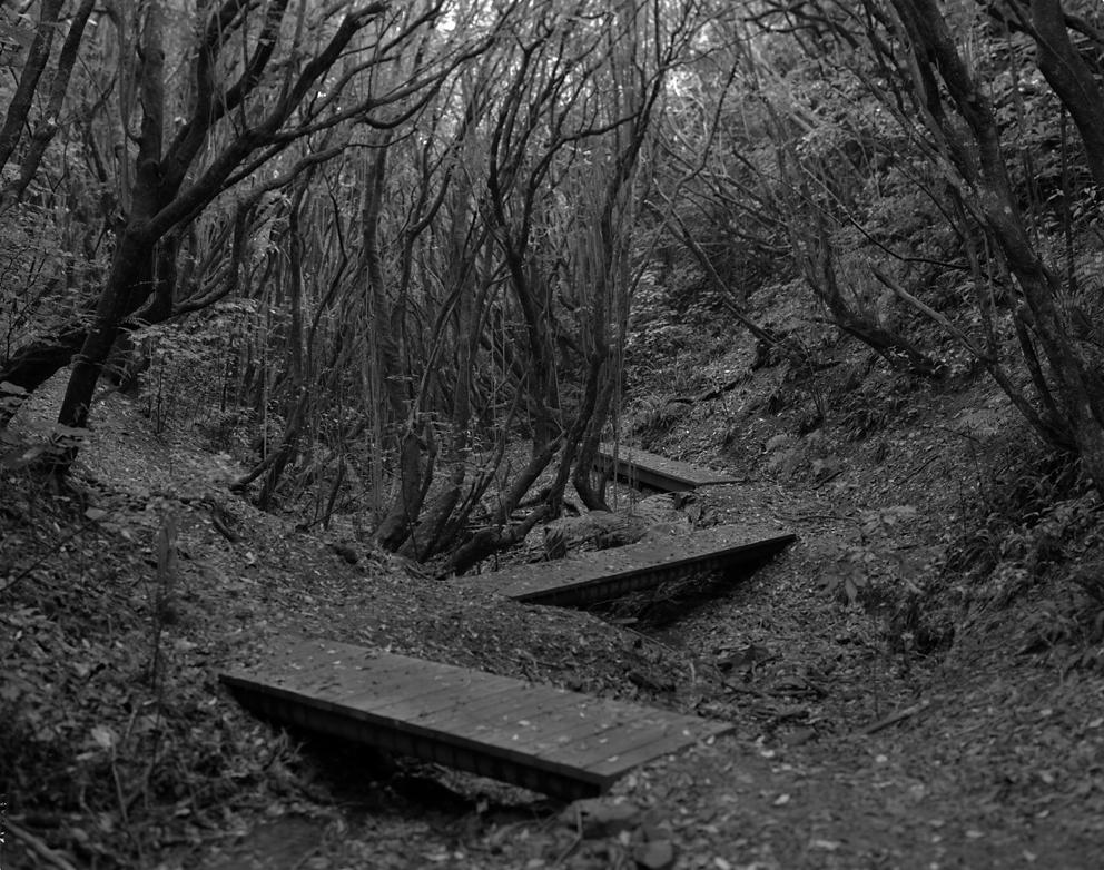 Aro Valley Reserve 01 - Bridges.jpg